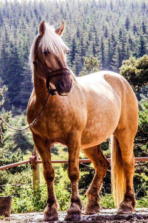 horse randonée mare