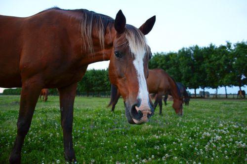 horse horses horse looks