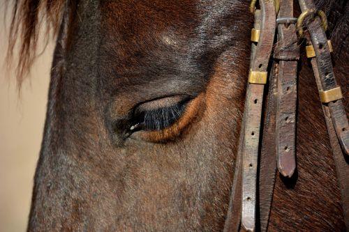horse animal head animal