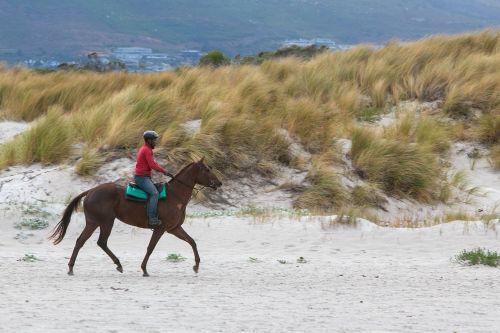 horse rider beach