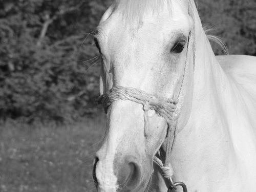 horse animal horse portrait