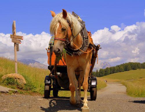 horse calash road
