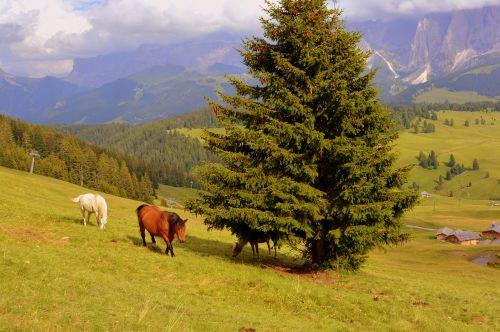 horse tree prato