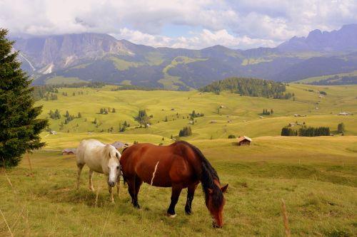 horse prato dolomites