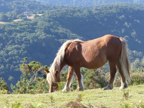 horse mountain horses