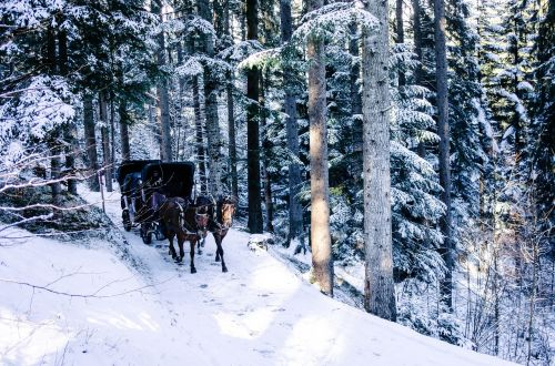 horse chariot winter