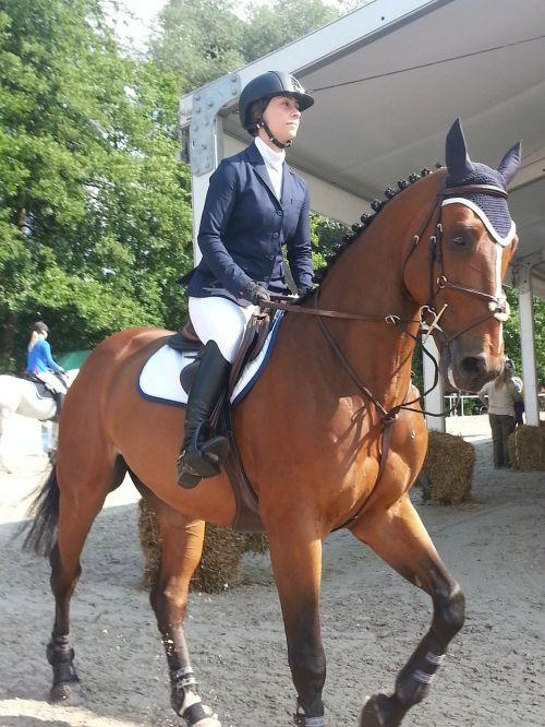 horse horses animals