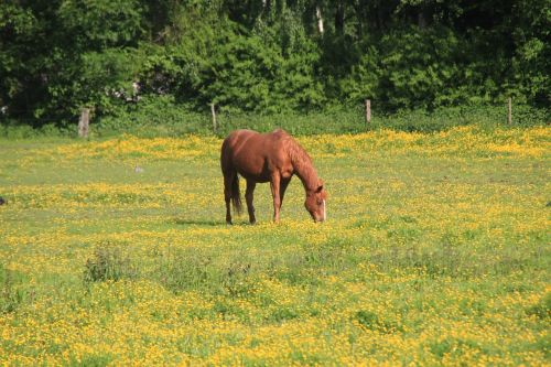 horse ride reiter
