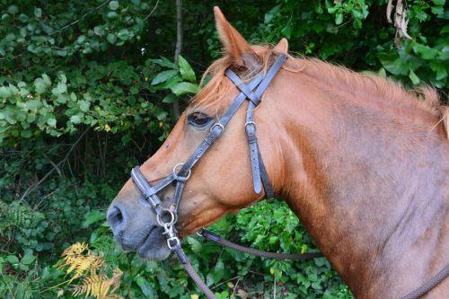 horse head net