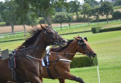 horse race horses dressage