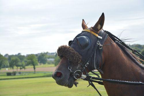horse horse racing reins