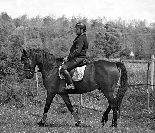 horse animal equestrian