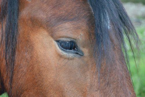 horse eye eyelashes