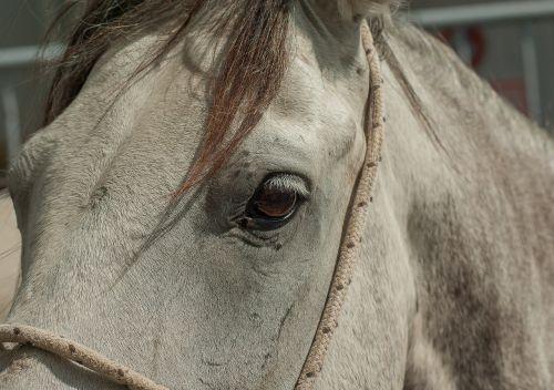horse camargue equine