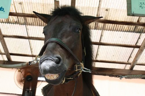horse front facial expressions