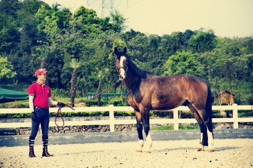 horse riding equestrian