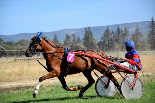 horse sport hippodrome