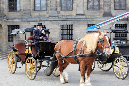 horse cart lifestyle