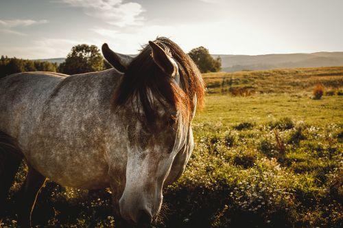 horse nature koník