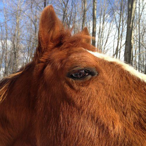 horse horse head quarter horse