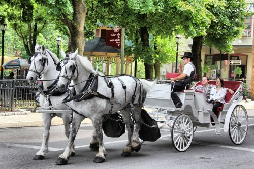 horse carriage transportation