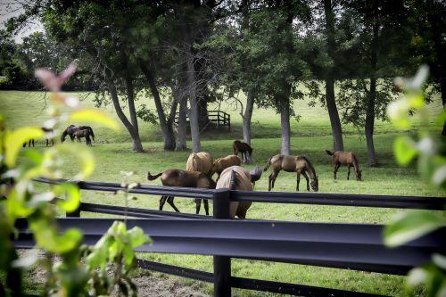 horse farm kentucky