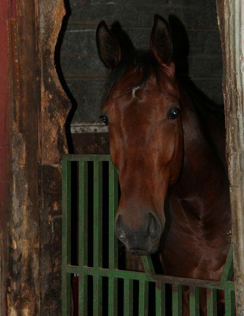 horse animal barn