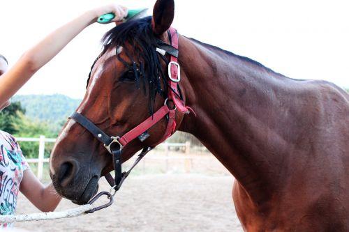 horse trim comb horse
