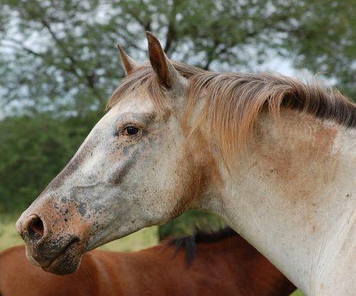horse countryside horse head