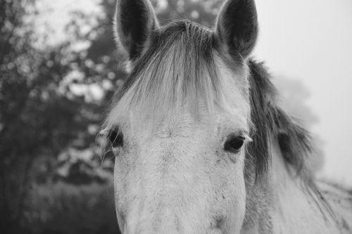 horse photo black white next to horse