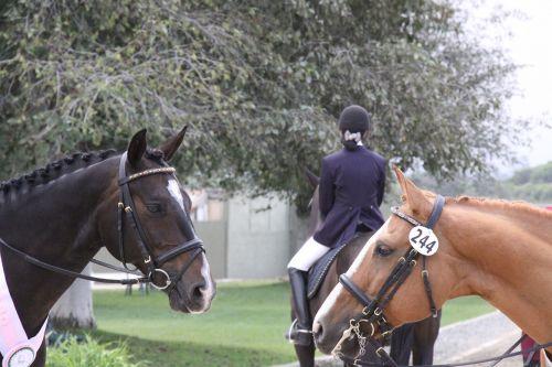 horse dressage horse show