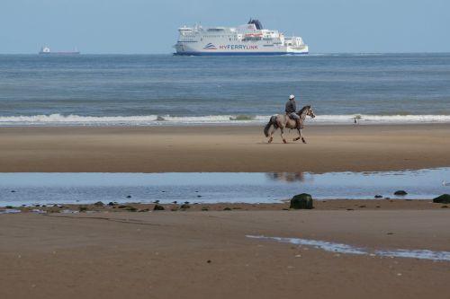 horse beach beach rider