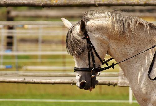 horse mold pasture
