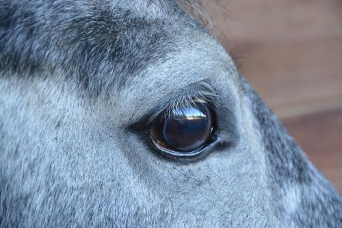 horse horse eye next to horse
