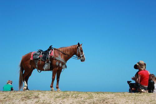horse saddle blue sky