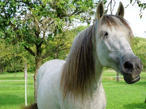 horse nature pasture
