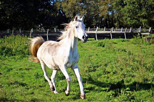 horse mold gallop