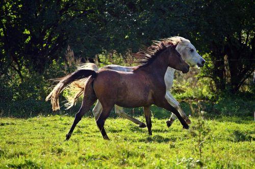 horse mold flock