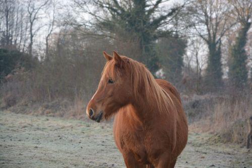 horse profile horse mane