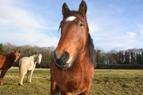 horse head face next to horse