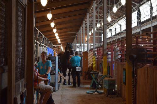 horse barn state fair