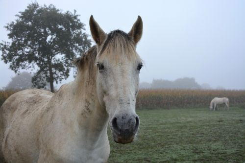 horse equines prairie
