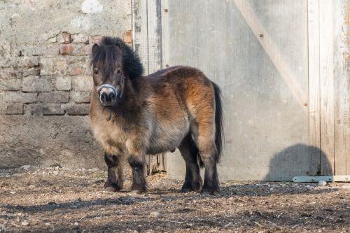 horse small horse pony