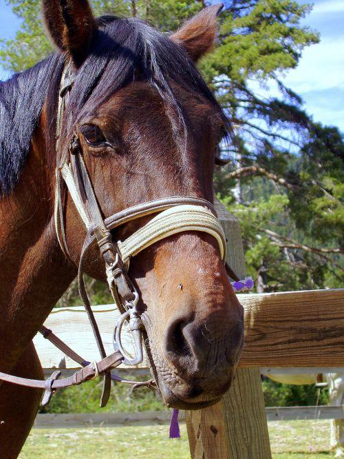horse head eye horse