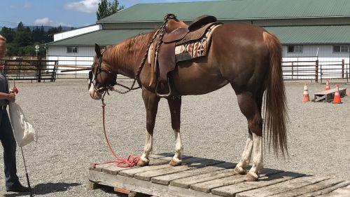 horse equine animal
