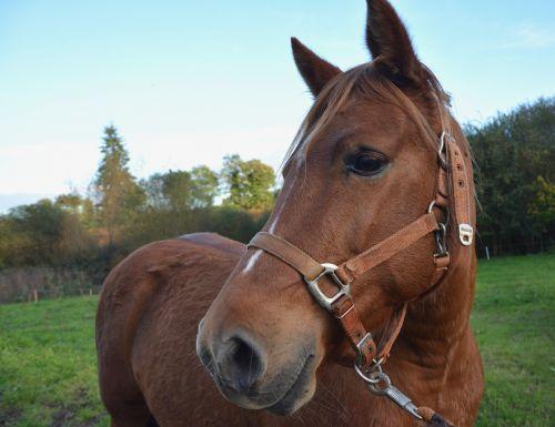 horse mare equine