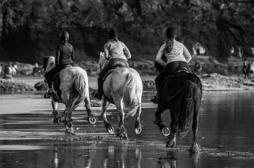 horse races running