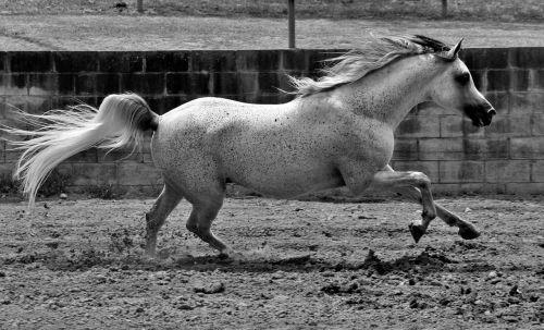 horse equine horses