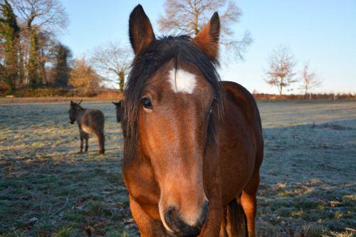 horse head horse horse postman iris