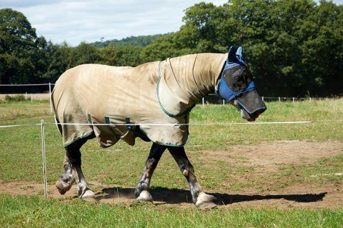 horse equine breeding horses